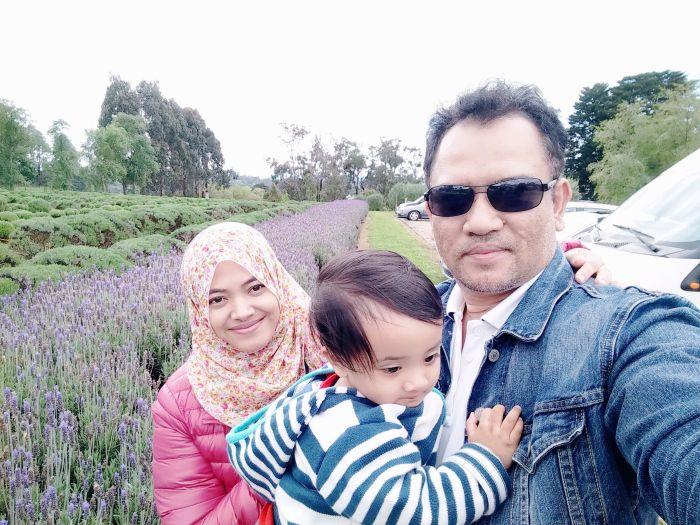 Banyaknya lavendar